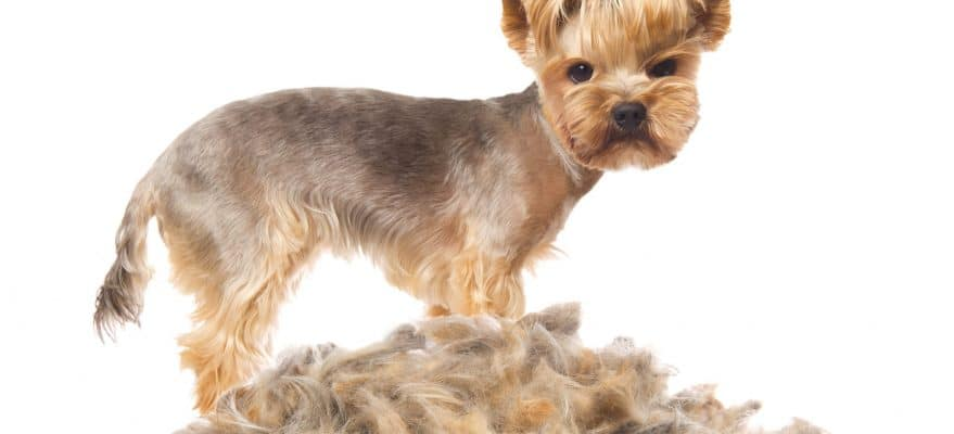 remove-pet-dander-from-your-home-879x400